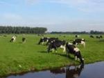 koeien inwei